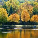 Golden Fall Reflection thumbnail