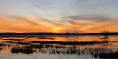 New Mexico Sunrise (Patricia Henschen) Tags: socorro newmexico bosquedelapache nationalwildliferefuge sanantonio wetland clouds mountain mountains nwr sunrise riogrande river winter reflection