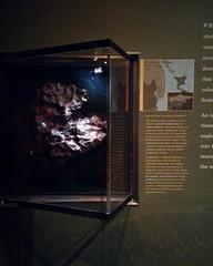 Fragment of Sikhote-Alin #newyorkcity #newyork #manhattan #amnh #sikhotealin #meteorite #iron #siberia #russianfareast #primorye #americanmuseumofnaturalhistory #latergram (randyfmcdonald) Tags: manhattan latergram iron sikhotealin newyorkcity primorye newyork siberia meteorite americanmuseumofnaturalhistory amnh russianfareast