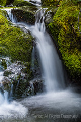 Tiny Waterfall in Grand Valley in Olympic National Park (Lee Rentz) Tags: creek grandcreek grandpasstrail grandvalley olympicmountains olympicnationalpark olympicpeninsula olympics pacificnorthwest washington washingtonstate america autumn backpack backpacking clean clear fall falling falls fast flowing hike hiking landscape moss mossy motion mountains movement nature northamerica northwest outdoors river scene scenery september stream subalpine trail tributary trip unitedstates usa vertical walk walking water waterfall