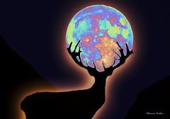Faith (monicaledan) Tags: stag moon stagwithmoon staghorn night nightlandscape nature faith brightmoon darkness darkstag scenery nightscenery darksky groupforeveryone