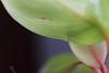 bngishakEOS 7D 0028965 (bngishak (Off..!!)) Tags: bngishak canoneos7d leaf dof indoor dedaun colours macro canonefs1855mmreverse