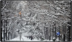 Hard winter in Romania, again! (2) (Ioan BACIVAROV Photography) Tags: hard winter hiver iarna bucharest romania snow neige zapada people tree trees arbre nature bacivarov ioanbacivarov bacivarovphotostream interesting beautiful wonderful wonderfulphoto nikon