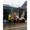 Selling Đào Tết (minus6 (tuan)) Tags: minus6 d810 50mm sapa vietnam