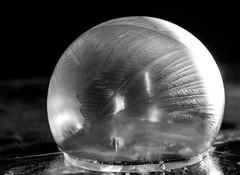 freezing cold ([-ChristiaN-]) Tags: winter cold ice soapbubble frozen eiskalt temperature bw blackandwhite black white eis fragile zerbrechlich kalt