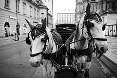 Stephansplatz (Wien) (petrwag) Tags: sonya6500 sigma16mmf14dcdn bw blackandwhite blancoynegro blackwhite wide wien vienna