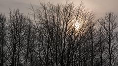 Morgensol (Walter Johannesen) Tags: morgensol morgenstund vintermorgen solopgang sunrise