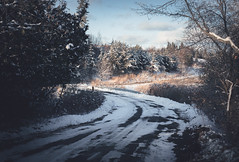 Road's End (Knsartist) Tags: dog road street nature snow winter trees forrest car empty bright sun cold freeze ice highway old sunlight forest