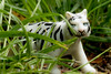 "20180112_2043_7D2-100 The White Tiger (johnstewartnz) Tags: 100canon 100mmmacro 100mmf28 aravindadiga canon7dmarkii canonapsc kindersurprise macromonday thewhitetiger booktitle plastictoy 100mm 7d 7dmarkii 7d2 apsc canon eos book novel toy ""myfavouriteread"" macromondays fiction"