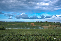 Afternoon on Tea field (Hồ Viết Hùng (Thanks so much for 1mil. views!) Tags: tea field green nature sky clouds water landscape nikond800