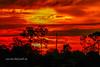 Sky Ablaze (tclaud2002) Tags: sky firey ablaze sun sunrise weather trees landscape nature mothernature clouds cloudy pineglades naturalarea pinegladesnaturalarea jupiter florida
