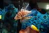 PC230079 (photos-by-sherm) Tags: living coast discovery center aquarium science san diego ca california winter environmental preserve zoo educational birds sea creatures