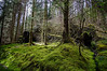 Green Carpet Of Moss (Half A Century Of Photography) Tags: argyll argyllshire forest moss carpet green pentax