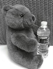 2018 Weekly Alphabet Challenge - Clear (marilyntunaitis) Tags: 2018weeklyalphabetchallengeclear waterbottle stuffedanimal teddybear plush
