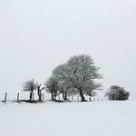A walk in the snow thumbnail