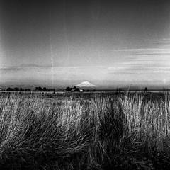 untitled by patrickjoust - patrickjoust | flickr | tumblr | instagram | facebook | books | prints  ...  Mamiya C330 S and Sekor 80mm f/2.8  Kodak Verichrome Pan (expired 2005) developed in Rodinal (1:50)