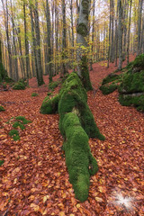 the rock (Javier Colmenero) Tags: roca verde bosque otoño urbasa navarra nikon nikond7200 sigma sigma1020 paisaje naturaleza nature landscape naturephotography rock forest green red rojo árbol