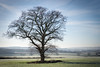 woodchurch morning (Jez22) Tags: tree blue sky frost morning woodchurch kent england field lone nopeople mist shadows countryside scenic green branches copyright jeremysage