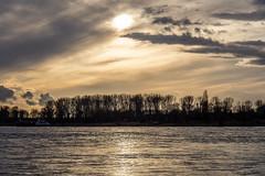Düsseldorf-Benrath / Rhein - VIII (KL57Foto) Tags: 2018 benrath düsseldorf düsseldorfbenrath februar fluss germany gewässer jahreszeitenundwetter kl57foto landschaften nrw natur nordrheinwestfalen olympus penemp2 rhein rhine river winter