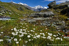 Пушица /  Cottongrass in the Valley of 7 Lakes (Tatters ✾) Tags: russia altai valleyof7lakes alpine mountains creek flowers whiteflowers hangingvalley geotag gps cottongrass осоковые eriophorum россия алтай