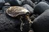 Tintarella (Benellissimo) Tags: eolie ginostra sicilia italia it turtle sea tartaruga mare guscio scheltro carapace morto morta dead sole abbronzatura eccessiva island sicily stromboli