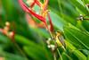 Souimanga à dos vert femelle 1 (Philippe Lécuyer) Tags: wildlife canon7dmarkii bird20iocreplaceoldbirdlist nature bird avifauna singapore singapour oiseau olivebackedsunbird cinnyrisjugularis nectariniidae