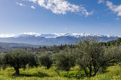 Lefka Ori (The White Mountains) (old.pappous) Tags: bermudabuttercups crete greece lefkaori whitemountains landscape snowcappedmountains springflowers