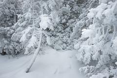 Whiteout (Aymeric Gouin) Tags: canada ontario brucepeninsula nationalpark park nature landscape paysage paisaje landschaft whiteout neige snow tree arbre randonnée hiking blanc white travel voyage fujifilm xt2 aymgo aymericgouin