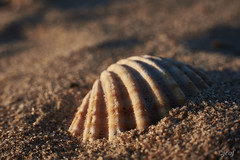 Estructura. (jcof) Tags: concha molusco macro arena playa beach nature naturaleza