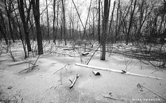 Winter wetlands (mswan777) Tags: white black monochrome ansel 1020mm sigma d5100 nikon scenic wet michigan winter frozen cold ice water snow landscape nature outdoor wood forest