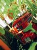 (meeeeeeeeeel) Tags: model diecast iphone iphoneography toctak souvenir londonbus brinquedo verde green jardim garden plantas rouge rosso rojo vermelho red toybus ônibusdebrinquedo ônibus bus doubledecker toy