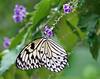 DSC00203 Paper Kite Enjoying Blue Skyflower (Nancy loves ping pong) Tags: sonyrx10iv bridgecamera paperkite butterfly butterflywonderland bokeh bokehoftheday november2017 bokehlicious topazsoftware topazadjust topazsimplify