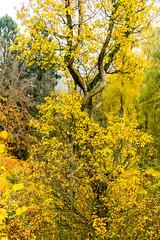 20171114-DSC06072 (Andreas BL) Tags: hagen hagensüd herbst landschaftfotografie laub natur outdoor nordrheinwestfalen deutschland de