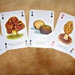 Edible Mushrooms thumbnail