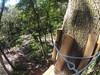 G0121347 (harleyhurricane1) Tags: line zip zipline ziplinepark dadecityflorida treehoppers centralflorida largestziplineparkincentralfl dadecity