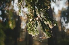 000116400019 (MatveyKarmakov) Tags: nikon nikonf3 kodak 35mmfilm morning film analog filmisnotdead filmphotography filmphoto filmcamera filmlandscape filmcommunity onfilm ishootfilm wood forest folk livefolk