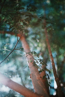 Nature (film)