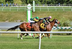 "2017-06-30 (58) r9 Steve Hamilton on #4 Gator Boy (JLeeFleenor) Tags: jockey جُوكِي jinete dżokej jocheu คนขี่ม้าแข่ง jóquei žokej kilparatsastaja rennreiter fantino 기수"" жокей jokey người horses thoroughbreds equestrian cheval cavalo cavallo cavall caballo pferd paard perd hevonen hest hestur cal kon konj beygir capall ceffyl cuddy yarraman faras alogo soos kuda uma pfeerd koin حصان кон 马 häst άλογο סוס घोड़ा 馬 koń лошадь photos photography md maryland marylandhorseracing marylandracing outside outdoors"