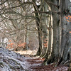 SHAMBLETON WOODS (Stan Farrow Photography) Tags: shambleton wood snow beech trees gauldry fife winter frost
