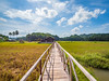 Bohol landscape (TeunJanssen) Tags: bohol philippines asia southeastasia travel traveling worldtravel backpacking olympus omd em10 visayas bridge sky rice clouds farm hdr 918mm