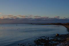 Late afternoon in Öresund (frankmh) Tags: öresund water sea light sky cloud beach shore shoreline bird swan hittarp helsingborg skåne sweden outdoor