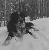BOSTON - THE - DOG (photosinphotos) Tags: hassselblad 500c hp5 dog ilfosol3 114 sony rx1 10 dioptre