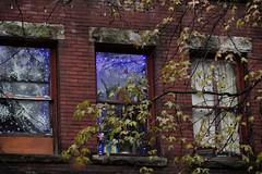windows (annapolis_rose) Tags: vancouver gastown abbottstreet windows streetart