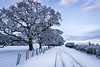 A white morning (Matt D Marshall) Tags: snow winter fields england britain ice white country countryside drift road trees clouds sheep