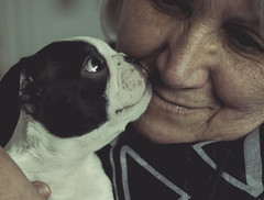 The scamp and mum (dusk_rider) Tags: equalityforall flickr fridays dog boston terrier puppy mum mother nikkor 60mm f28d nikon d7200 love dusk rider