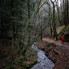 Woodland Path (evans.photo) Tags: woodland wales ceredigion outdoors path tynbedw winter red trees