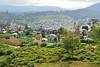 Sri_Lanka_17_101 (jjay69) Tags: srilanka ceylon asia indiansubcontinent teatrees teaplantation nuwaraeliya hilltown