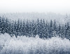 Winter Trees (andreassofus) Tags: winter snow cold freezing frost pine pinetrees ice forest woods abstract lines landscape nature sweden canon monochrome sky white blackwhite beautiful wintertime