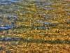 Distortion (elphweb) Tags: hdr highdynamicrange nsw australia coast coastal water distort distortion refraction reflection distorted wavelets waves ripples ripple creek beach