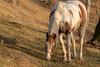 (robertobiondi1) Tags: cavallo